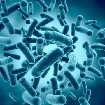 Maatregelen tegen Acinetobacter bacterie